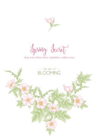 Dog-rose, briar, brier, eglantine, canker-rose. Template for wedding invitation, greeting card, banner, gift voucher with place for text. Graphic drawing, engraving style. Vector illustration. Ilustracja