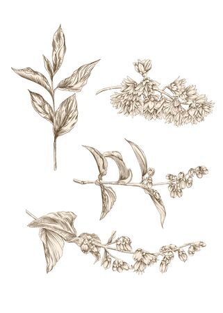 Spring flowers set. Graphic drawing, engraving style vector illustration Ilustracja