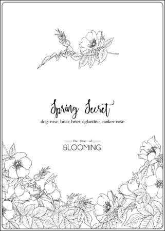 Dzika róża, wrzośca, wrzosiec, eglantyna, rak róża. Szablon zaproszenia ślubne, karty z pozdrowieniami, baner, bon upominkowy. Zarys grafiki. Ilustracja wektorowa w czerni i bieli. Ilustracje wektorowe
