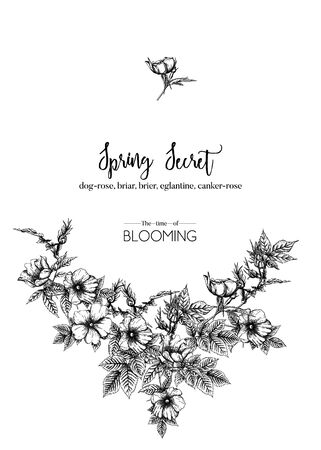 Dog-rose, briar, brier, eglantine, canker-rose. Template for wedding invitation, greeting card, banner, gift voucher. Graphic drawing, engraving style. Vector illustration in black and white.