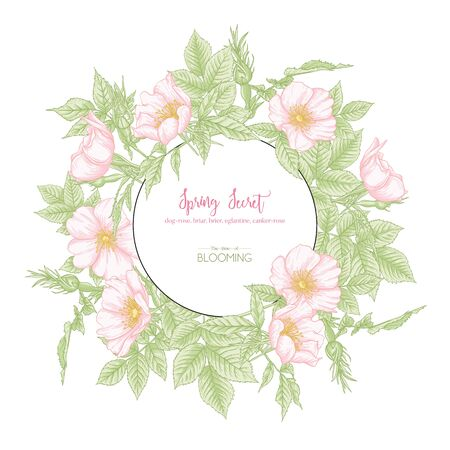 Dog-rose, briar, brier, eglantine, canker-rose. Template for wedding invitation, greeting card, banner, gift voucher with place for text. Graphic drawing, engraving style. Vector illustration. 일러스트