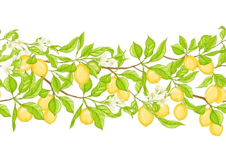 Lemon tree branch with lemons, flowers and leaves. Seamless pattern, background. Colored vector illustration. Isolated on white background..