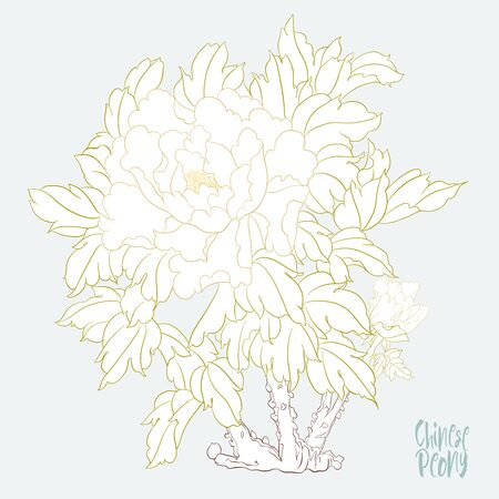 Peony tree branch with flowers in the style of Chinese painting on silk. Elements for design. Colored vector illustration. Isolated on white background..