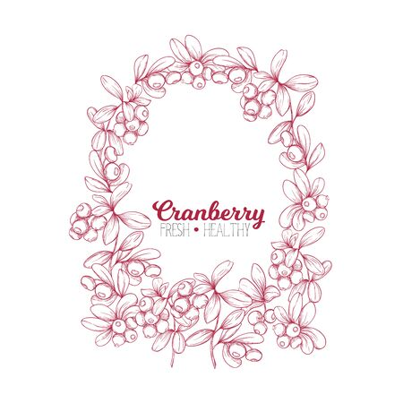 Cranberry. Element for design. Good for product label. Colored vector illustration. Graphic drawing, engraving style. Vector illustration