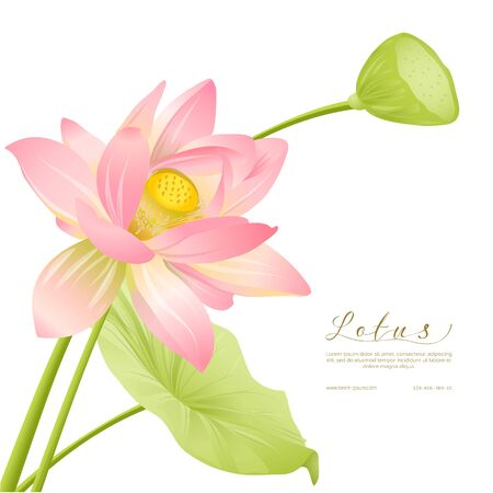 Lotus flowers. Template for wedding invitation, greeting card, banner, gift voucher with place for text. Colored vector illustration. Vector Illustratie