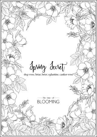 Dog-rose, briar, brier, eglantine, canker-rose. Template for wedding invitation, greeting card, banner, gift voucher. Outline graphic. Vector illustration in black and white.