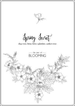 Dog-rose, brezo, brier, eglantine, cancro-rose. Plantilla para invitación de boda, tarjeta de felicitación, banner, vale de regalo. Gráfico de contorno. Ilustración de vector en blanco y negro.