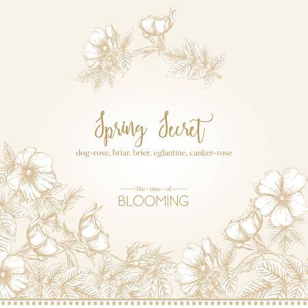Dog-rose, briar, brier, eglantine, canker-rose. Template for wedding invitation, greeting card, banner, gift voucher. Graphic drawing, engraving style. Vector illustration in beige and white.