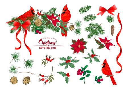 Cardinal bird - a symbol of Christmas. Christmas wreath of spruce, pine, poinsettia, fir. Set of elements for design Colored vector illustration. Isolated on white background..