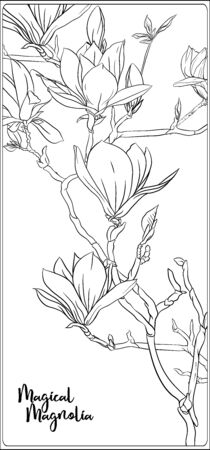Magnolia tree branch with flowers. Coloring page for the adult coloring book. Outline hand drawing vector illustration.. Archivio Fotografico - 133929002