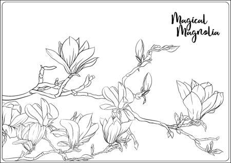 Magnolienbaumzweig mit Blumen. Malvorlage für das Malbuch für Erwachsene. Umreißen Sie Handzeichnungsvektorillustration.. Vektorgrafik