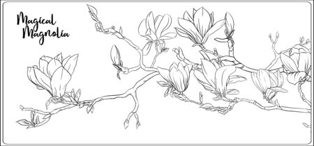 Magnolia tree branch with flowers. Coloring page for the adult coloring book. Outline hand drawing vector illustration..