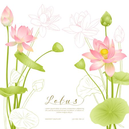 Lotus flowers. Template for wedding invitation, greeting card, banner, gift voucher with place for text. Colored and outline design. Vector illustration. Illusztráció