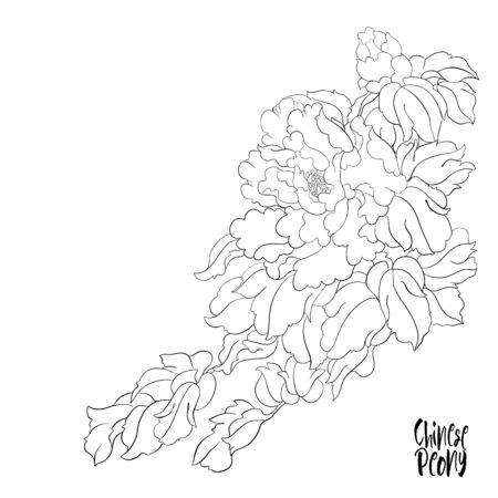 Peony tree branch with flowers with pheasants in the style of Chinese painting on silk Set of elements for design Outline hand drawing vector illustration..