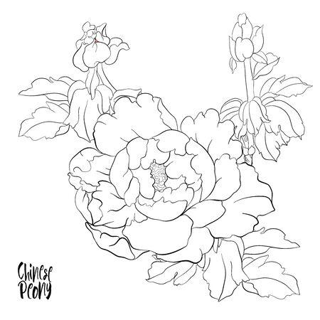 Rama de un árbol de peonía con flores con faisanes en el estilo de la pintura china sobre seda Conjunto de elementos para el diseño Ilustración de vector de dibujo a mano de contorno. Ilustración de vector