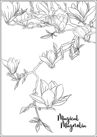 Magnolia tree branch with flowers. Coloring page for the adult coloring book. Outline hand drawing vector illustration.. Archivio Fotografico - 133930168