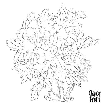Branche d'arbre de pivoine avec des fleurs avec des faisans dans le style de la peinture chinoise sur soie Ensemble d'éléments pour la conception Décrire l'illustration vectorielle de dessin à la main..