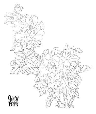 Ramo di un albero di peonia con fiori con fagiani nello stile della pittura cinese su seta Insieme di elementi per la progettazione Illustrazione vettoriale di disegno a mano di contorno..