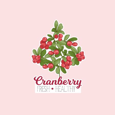 Cranberry. Element for design. Good for product label. Colored vector illustration