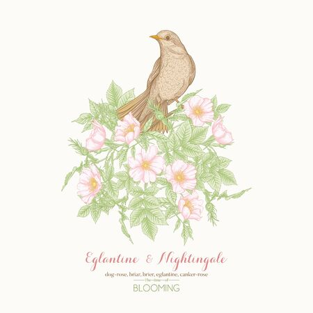 Dog-rose, briar, eglantine, cand nightingale. Template for wedding invitation, greeting card, banner, gift voucher. Graphic drawing, engraving style Vector illustration