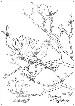 Magnolia tree branch with flowers and nightingale Coloring page for the adult coloring book. Outline hand drawing vector illustration..