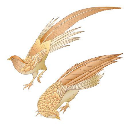 Pheasant, bird. Set of elements for design. Outline hand drawing vector illustration.