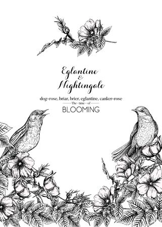 Dog-rose, briar, brier, eglantine, canker-rose and nightingale. Template for wedding invitation, greeting card, gift voucher. Graphic drawing, engraving style. Vector illustration in black and white.