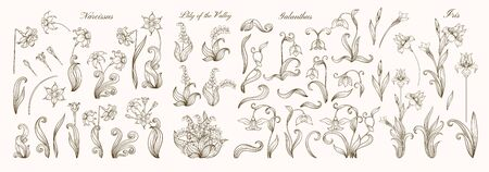 Set of spring flowers: iris, lily of the valley, snowdrop, daffodil. In art nouveau style, vintage, old, retro style. Outline vector illustration.