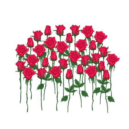 Red roses set. Multicolor vector illustration. Element for design.