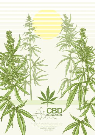 Hemp, Cannabis plant. Template, poster, card, good for product label. Vector illustration in natural green colors.