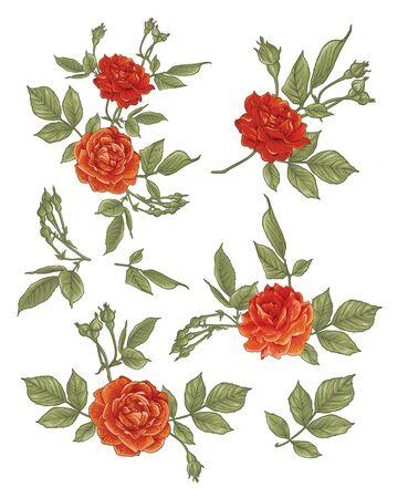 Roses set in vintage colors. Multicolor vector illustration. Element for design. Illustration