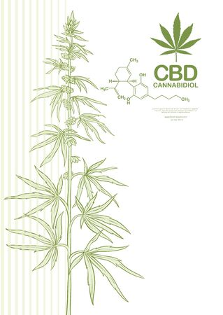 Hemp, Cannabis plant. Template, poster, card, good for product label. Vector illustration in light green colors.