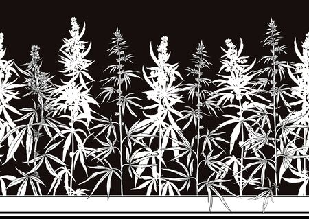 Hemp, Cannabis seamless pattern, background. Vector illustration. Black and white graphics