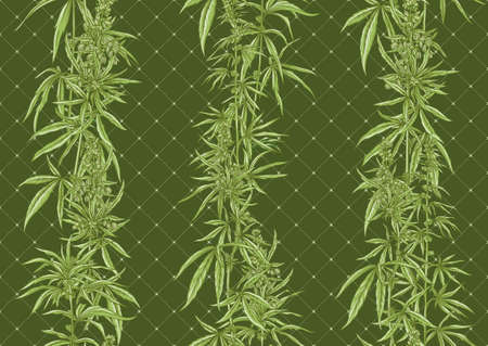 Hemp, Cannabis seamless pattern, background. Vector illustration. In botanical style on green background..