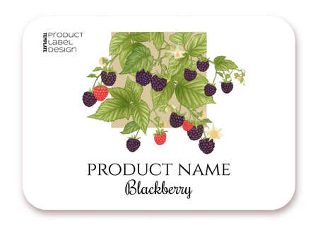 Blackberry. Ripe berries on branch. Template for product label, cosmetic packaging. Easy to edit. Graphic drawing, engraving style. Vector illustration..