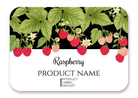 Raspberry. Ripe berries on branch. Template for product label, cosmetic packaging. Easy to edit. Graphic drawing, engraving style. Vector illustration..