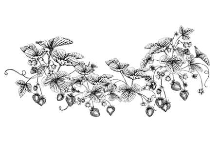 Strawberry branch with red berries. Clip art, set of elements for design Graphic drawing, engraving style. Vector illustration. Isolated on white background. Vettoriali