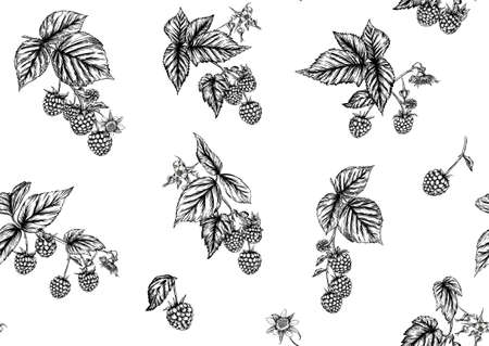 Raspberry or blackberry. Ripe berries on branch. Seamless pattern, background. Graphic drawing, engraving style. Vector illustration on black background.