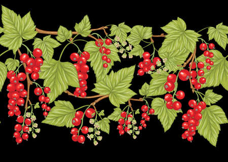 Redcurrant red ribes. Ripe berries. Seamless pattern, background. Vector illustration. In botanical style on black background