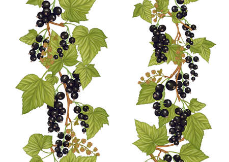 Black currant. Ripe berries. Seamless pattern, background. Vector illustration. In botanical style Isolated on white background