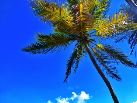 st lucia: Palm Tree in gorgeous St Lucia