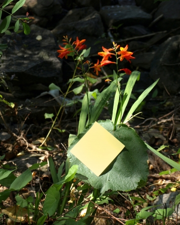 postits: Flowers and post-it Stock Photo
