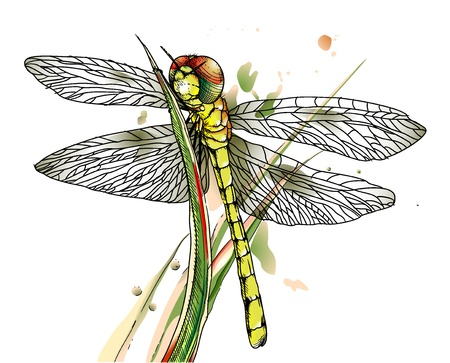 Dragonfly on grass. Vector illustration. Stock Vector - 15234878