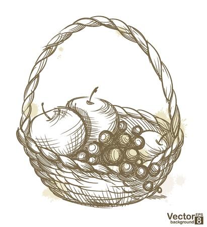 canasta de frutas: Cesta con frutas ilustraci�n vectorial Vectores