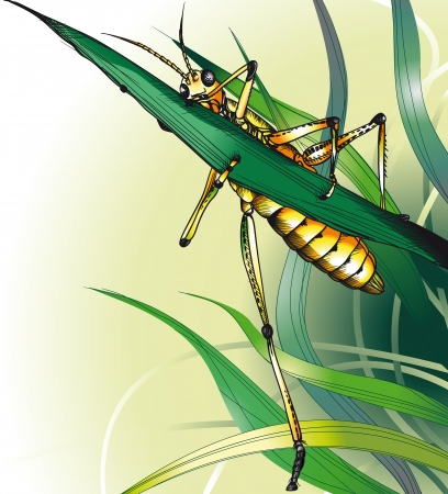 Grasshopper in the Grass. Vector