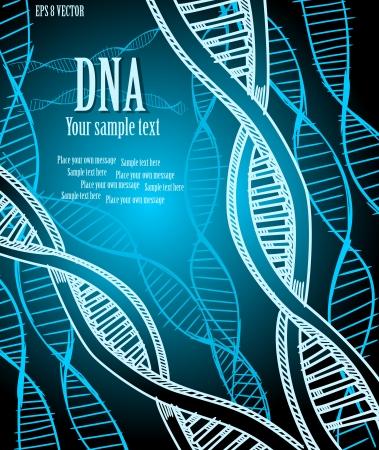adn humano: Hebras de ADN. Vectores
