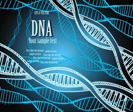 dna strands: DNA strands. Vector illustration. Eps 8.