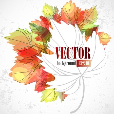 Autumn leaves. Vector illustration. Eps 10. Stock Vector - 16922691