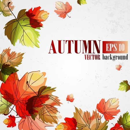 autumn background: Autumn background.