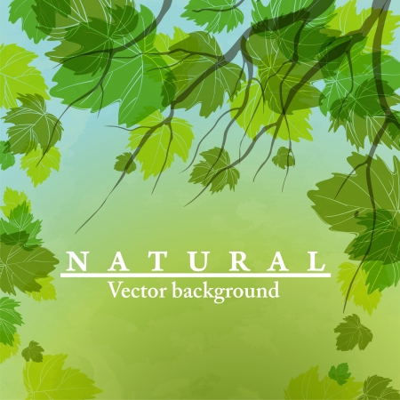 Fresh green leaves on natural background Stock Vector - 16940115